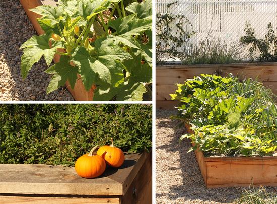 Cube Rooftop Garden