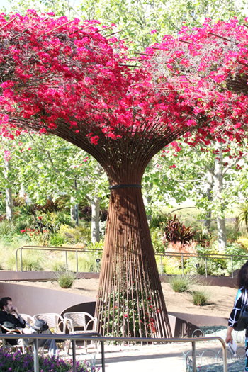 Bougainvillea at the Getty Museum
