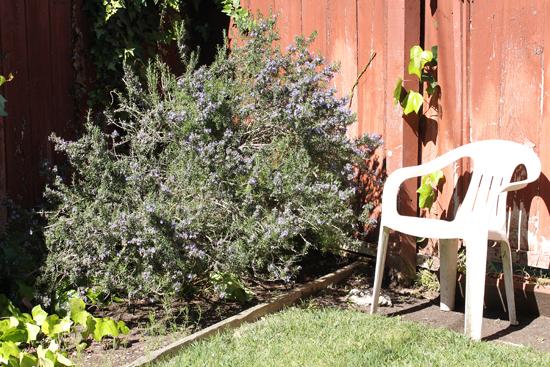 Free Range Rosemary
