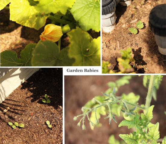 Post image for Garden Babies