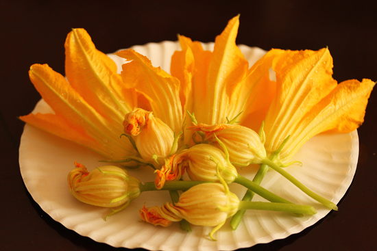 Post image for Stuffed Zucchini Flowers